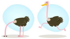 Pista que se ejecuta y de ocultación de la avestruz Foto de archivo libre de regalías