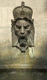 Pista real del león Foto de archivo