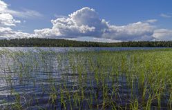 Pista River on a sunny summer day. Karelia. Stock Images