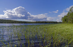 Pista River on a sunny summer day. Karelia. Stock Photography