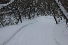Pista rusa del esquí del invierno en un bosque 30015 del abedul Foto de archivo libre de regalías