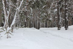 Pista rusa del esquí del invierno en un bosque 30023 del abedul Fotografía de archivo