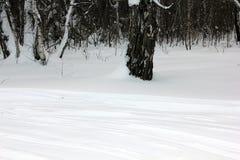 Pista rusa del esquí del invierno en un bosque 30007 del abedul Imagen de archivo libre de regalías