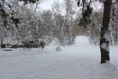 Pista rusa del esquí del invierno en un bosque 30023 del abedul Imágenes de archivo libres de regalías