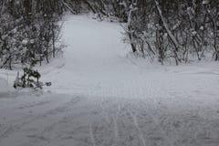 Pista rusa del esquí del invierno en un bosque 30049 del abedul Imágenes de archivo libres de regalías
