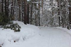Pista rusa del esquí del invierno en un bosque 30024 del abedul Fotos de archivo libres de regalías