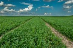 Pista tecnologica sul campo agricolo Fotografia Stock Libera da Diritti