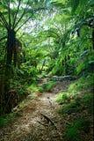 Pista a través de la selva Fotografía de archivo libre de regalías