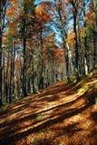 Pista a través del bosque del otoño Fotos de archivo