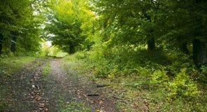 Pista a través del bosque Imagen de archivo