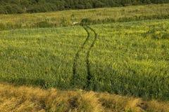 Pista in un campo verde Immagine Stock