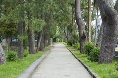 Pista in un parco incorniciato dai pini Fotografia Stock Libera da Diritti