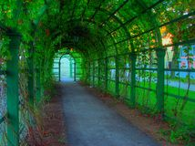 Pista verde Imagens de Stock Royalty Free