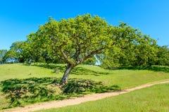 Pista verde del árbol y de senderismo debajo del cielo azul Imágenes de archivo libres de regalías