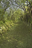 Pista verde do país Fotos de Stock