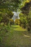 Pista verde do país Imagens de Stock Royalty Free