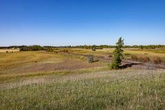 Pista y árboles de ferrocarril en pradera debajo del cielo azul Imagen de archivo libre de regalías