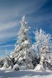 Pista y árboles del invierno Foto de archivo libre de regalías