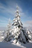 Pista y árboles del invierno Fotografía de archivo libre de regalías