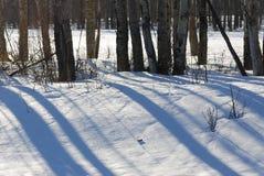 Pista y árboles del invierno en la isla de los alces Imagen de archivo