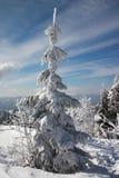 Pista y abetos del invierno Imagenes de archivo