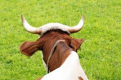 Pista y claxones de la vaca imágenes de archivo libres de regalías