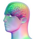 Pista y el cerebro humano Fotos de archivo