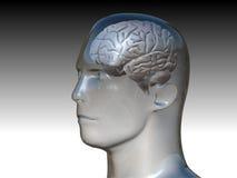 Pista y el cerebro humano Foto de archivo libre de regalías