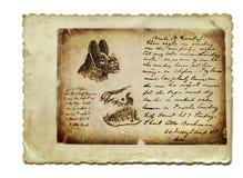 Pista y quijada del palo Imagen de archivo