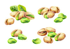 Pistachio compositions watercolor set. Hand-drawn illustration Royalty Free Stock Photography