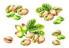 Pistachio compositions watercolor set. Hand-drawn illustration Royalty Free Stock Image