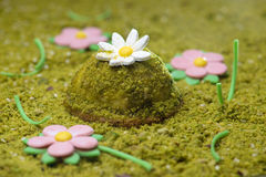 Pistachio desert decorated with daisy flowers. Pistachio desert decorated like green grass with daisy flowers stock photo