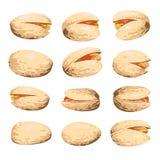 Pistachio fruit set isolated on white Royalty Free Stock Photo