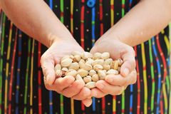 Pistachio nut. Stock Images