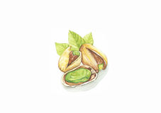 Pistachio. Nut watercolor painting  on white background Stock Photography