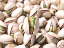 Pistachio nuts Royalty Free Stock Photo
