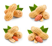 Pistachio nuts collection Stock Image