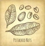 Pistachio nuts set. Stock Photo