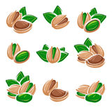 Pistachio nuts set. Vector Royalty Free Stock Images