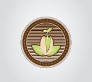 Pistachio seedling. Green pistachio seedling brown circle Stock Photo