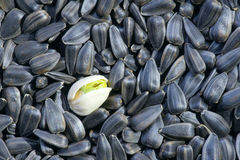 Pistachio and sunflower Royalty Free Stock Photos