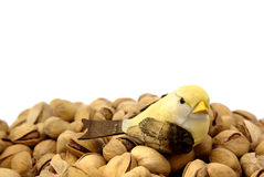 Pistachios and bird. One bird cork on background pistachios Stock Photo