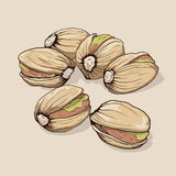 Pistachios. Hand drawn. Royalty Free Stock Photography