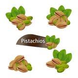 Pistaci nasiono w nutshell z liśćmi ustawiającymi Zdjęcia Stock