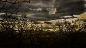 Pistacjowi drzewa obraz royalty free