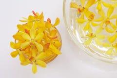 Pistas amarillas de la orquídea Fotografía de archivo