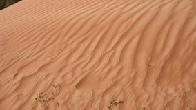 Pistas animales en la duna de arena ondulada del modelo almacen de metraje de vídeo