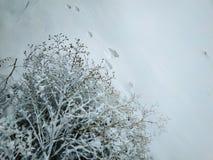 Pistas animales en la nieve imagenes de archivo