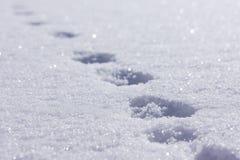 Pistas animales en la nieve. Fotos de archivo