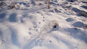 Pistas animales en la nieve - bosque de Europa foto de archivo